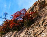 崖壁上的秋色