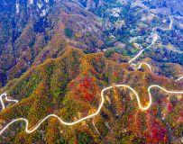 山路蜿蜒秋色中