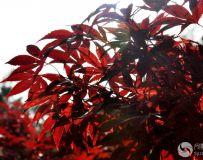 北京金秋——绚丽多彩之北宫国家森林公园(47)