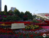 庆国庆长安街花坛集锦(31)
