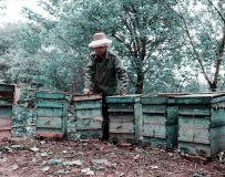《养蜂人》(组照)