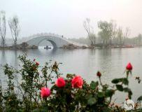 月季架金桥