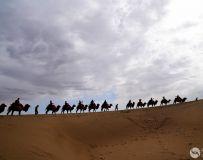 大漠驼铃(4)