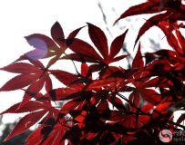 北京金秋——绚丽多彩之北宫国家森林公园(46)