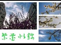 【13年第3期月赛】繁花似锦