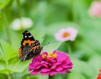 蝶儿与花儿