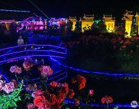 魅力夜色下的德阳园
