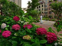 鲜花盛开的地方----镇平财富世家