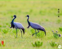 """光影中国网关于增设""""鸟类摄影""""版块的通知!"""