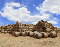 堆积如山的麦草垛