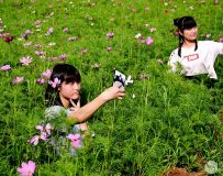 美在花丛中