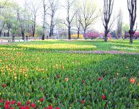 今春不平凡  花园待你还