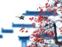 """2014第10期月赛""""秋意""""——【喜上枝头】"""