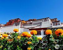 布达拉宫的春天