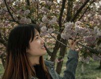 《校园樱花季》