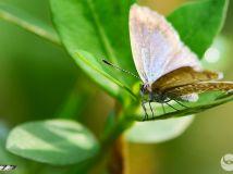 灰色小蝴蝶