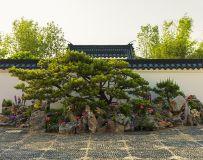 南阳月季大观园盆景园