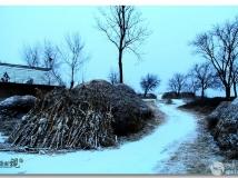 陇原2015年第一场雪