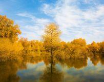 灿烂的秋2