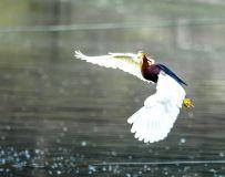 少年夜池(拍鸟习作)