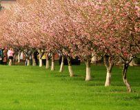 春天的色彩