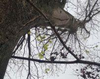 朽木逢新春 古树发嫩芽