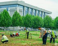 创造绿色地球