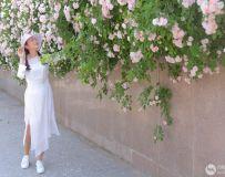 蔷薇花开(10)