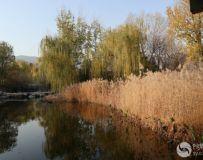 走进北京植物园 深秋一派好风光(67)