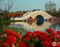 月亮桥观花