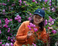 蔷薇花开心欢喜