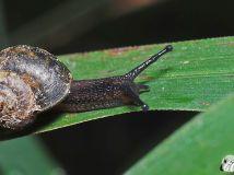 秋天的小蜗牛(二)