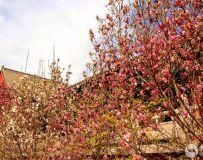 花红柳绿春满园