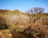 村口的那棵老树