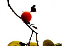 十月月赛-------------秋浓