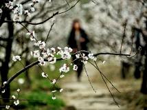 【2013年3月赛】走进春天里