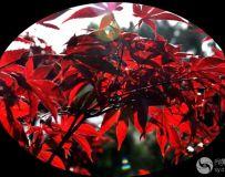 北京金秋——绚丽多彩之北宫国家森林公园(49)