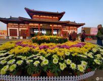 中国月季园南阳菊展(手机拍摄)