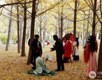 金秋北京奥森公园  红枫银杏彩叶飘飘(41)