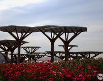 《花团锦簇大观园》