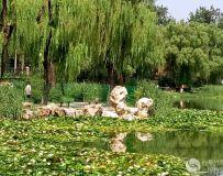 龙潭西湖风光(8)