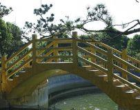 桥下开出星光花