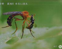 金韵部:南阳理工学院徐林玉昆虫作品展08