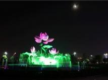 荷花广场夜景