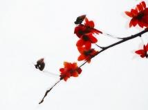 13年第3期月赛-广州市花别样美(组).(木棉花是广州的市花,每年3月,是它开得最灿烂时候