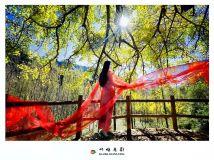千年银杏  中国红