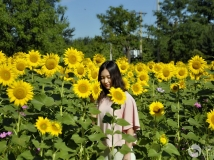 美女PK向阳花——2014第三届北京奥林匹克森林公园向日葵花展采撷之十一