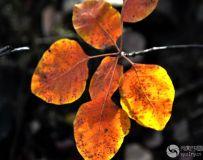 北京金秋——绚丽多彩之北宫国家森林公园(72)