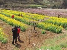 2015第三期月赛--油桃沟之春