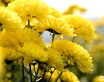 朵朵花儿开